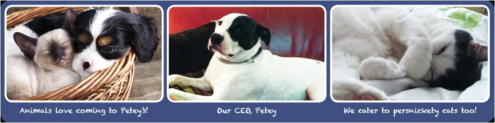 Peteys Pet Stop CEO